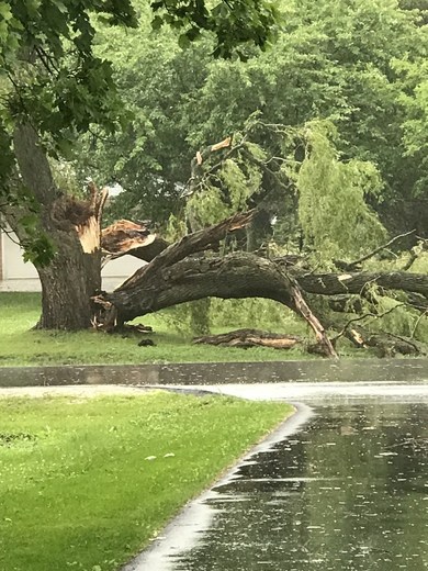 Tree in mequon hit by lightning. Solar heights subdivision.