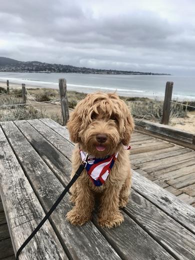 July 4th beach day