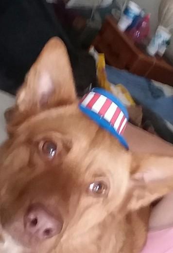 July birthday dog