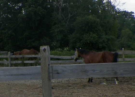 Pony hill farm in temple