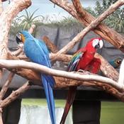 Beaux perroquets aux couleurs vives.