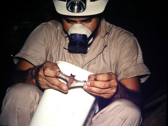 This is Gordon Beckett, as an OSU Master Degree Student in 1962 collecting data on bats in the Sellman Cave.