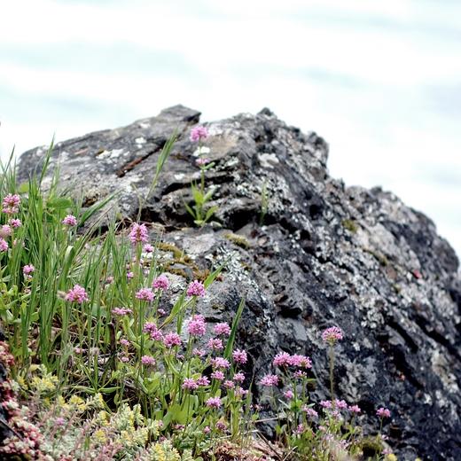 Rocky Headlands