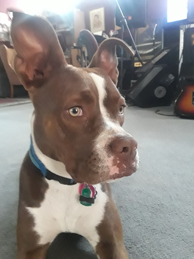 Coco 1 year old