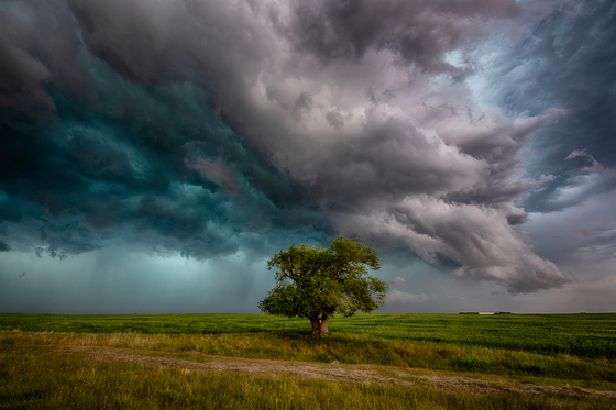 The Saskatchewan Tree