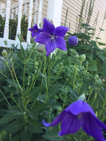 Fleurs Mi Juillet