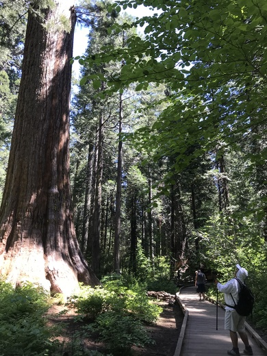 North Grove Trail at Calaveras Big Tree State Park, California