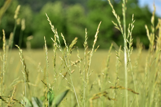 Macro Meadow