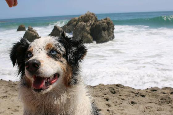 Surf and sand woof !