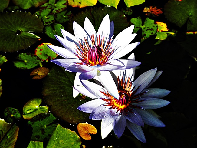 Photos the weather network beautiful flower sacred in hindi religion mightylinksfo