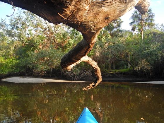 Nature's Corkscrew