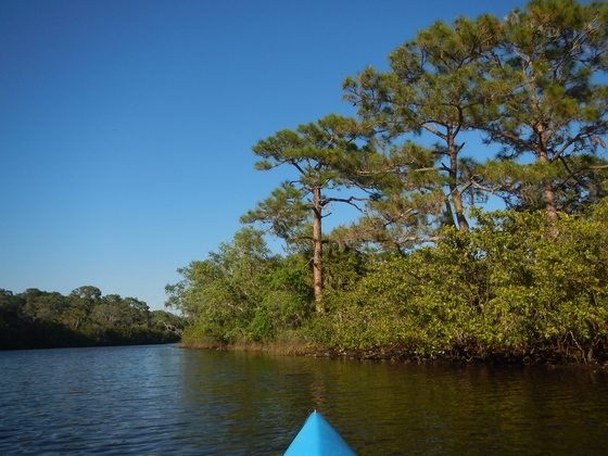 Paddle Perfect Florida Day