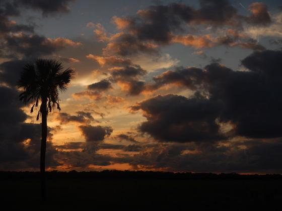 Sunset Over Wild Myakka