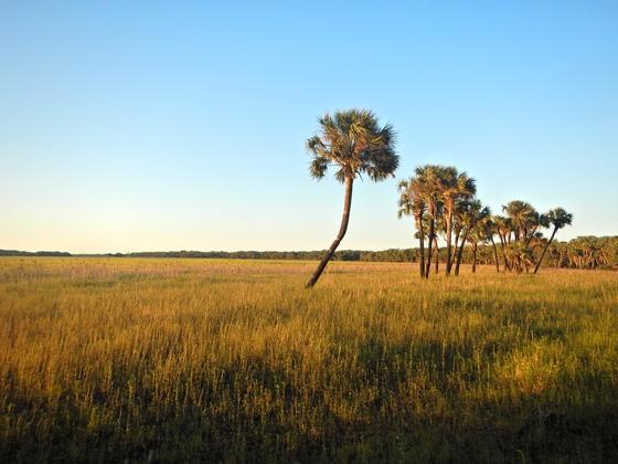 Florida's Golden Prairie