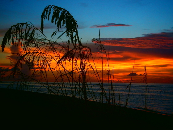 Sunset & Sea-Oats