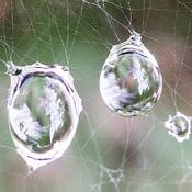 Gouttes d'eau dans une toile d'araignée