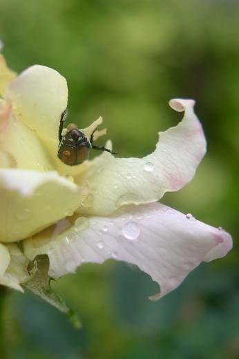 A bug in the rain
