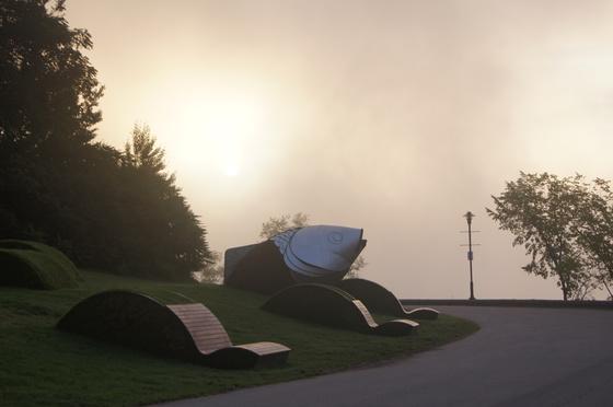 foggy sunset at the park