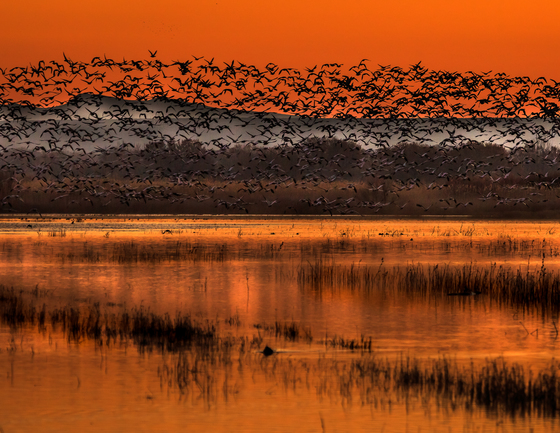 Doreen Lawrence, Bosque del Apache Wildlife Refuge
