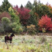 concour couleurs d'automne