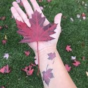 Couleurs d'automne!!!