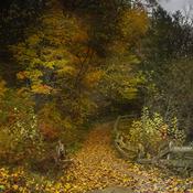 concour d automne
