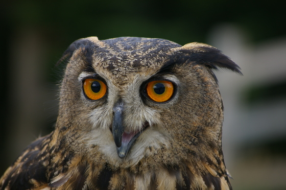 Fascinating eyes...