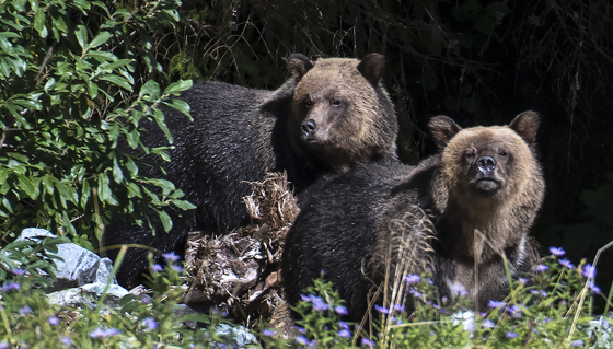 Grizzly Siblings