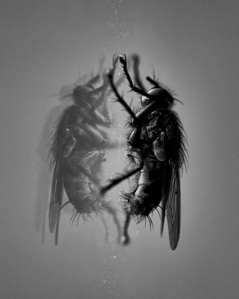 5a. House fly