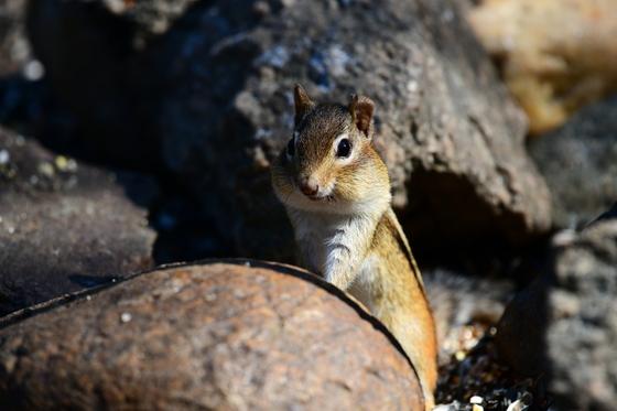 Monomoy National Wildlife Refuge