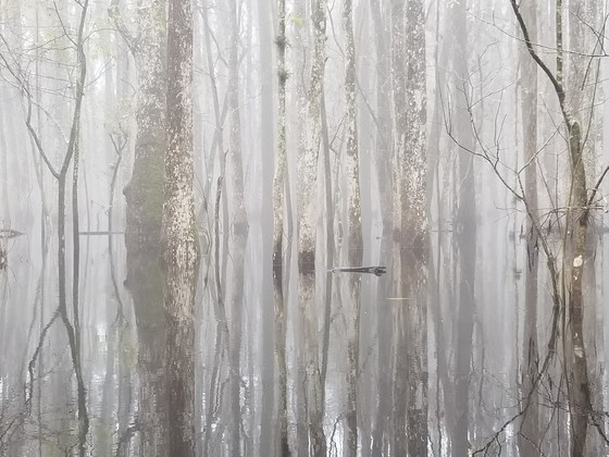 Tree Kayaking in the Fog
