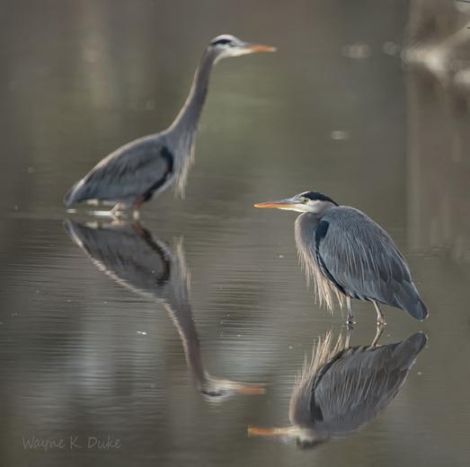 Marsh Pair