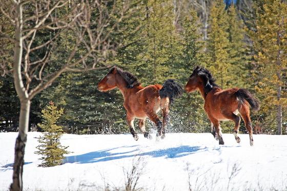 2 Wild Horses