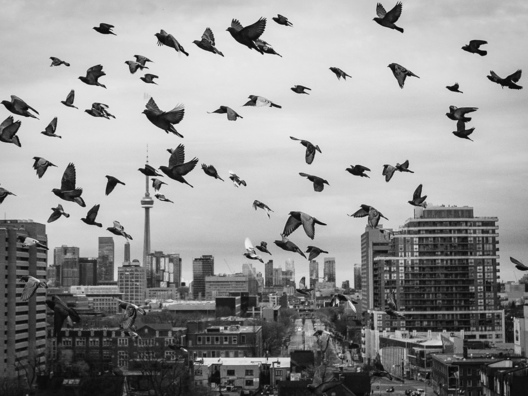 3b. Cloud of pigeons