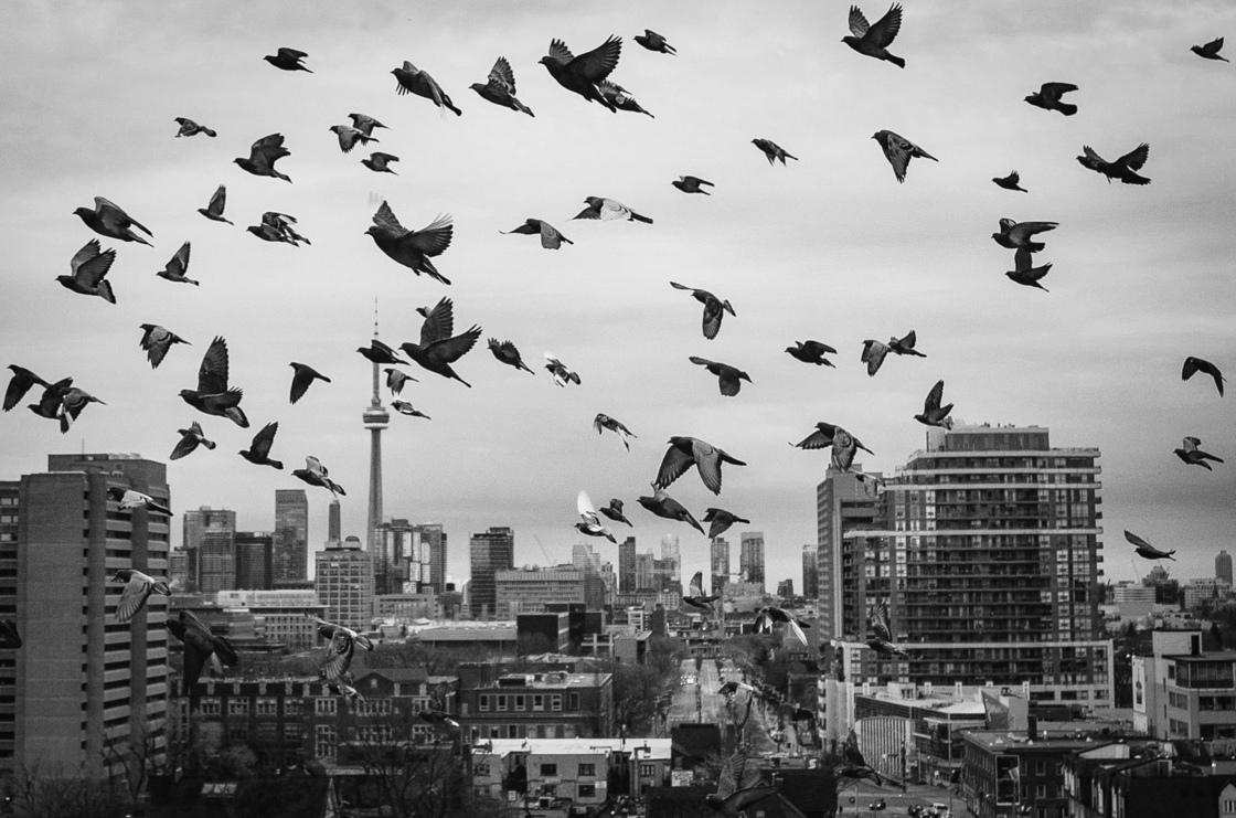 3b. Cloud of pigeons