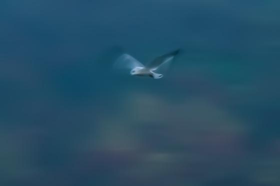 Impression of flight