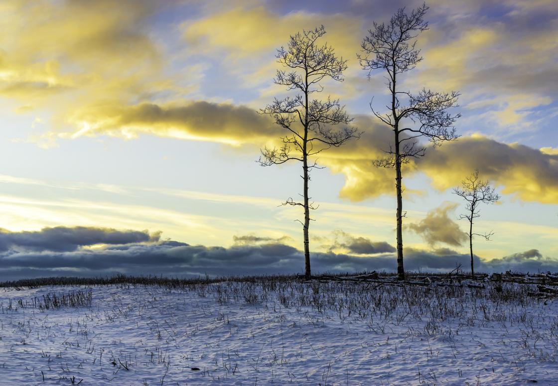 Three Trees Winter Sunset