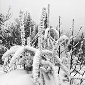 Tempête en noir & blanc