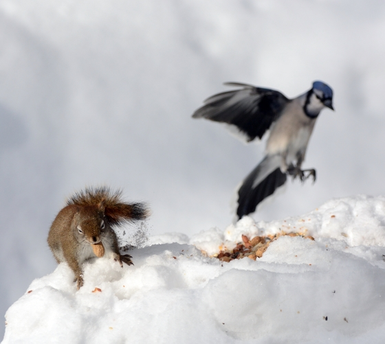 Is that you Blue Jay