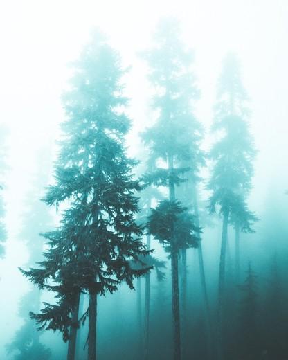 3c. Tree ghosts