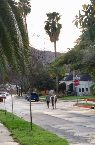 Out for a walk Western Style Glendale, California, US