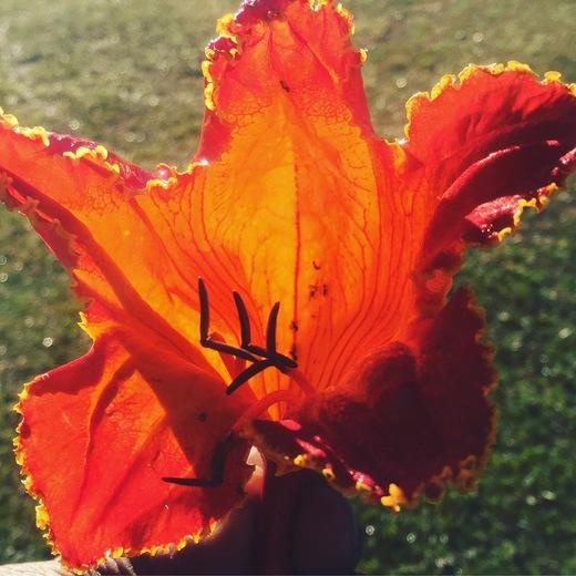 Fallen Treeflower