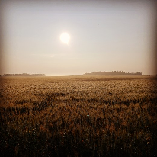 Silent Harvest