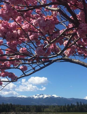 Image result for spring in parksville