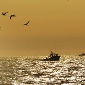 de l'or sur l'océan