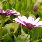 Les fleurs de saison