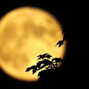la pleine lune du mois de Juin 2019