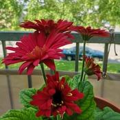 Belles fleurs d'été.