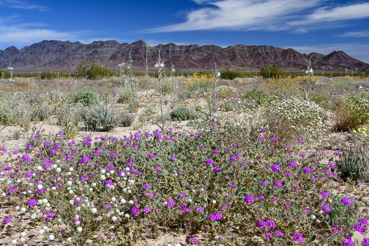 Desert Lily Sanctuary