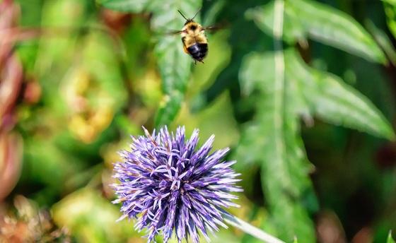 Buzzing Away